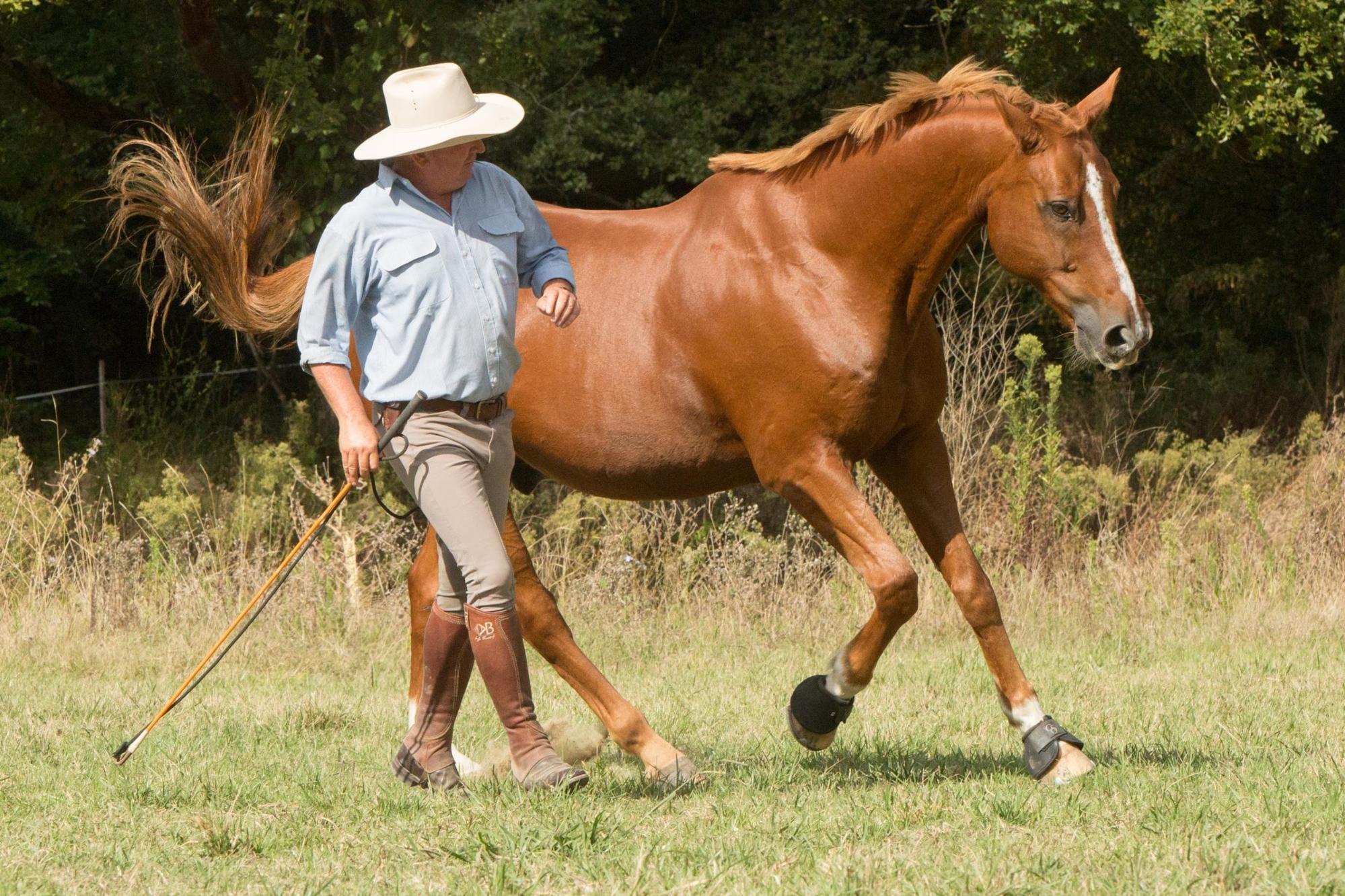 Horseman Les Essentiels
